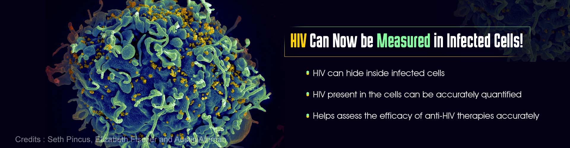 HIV can now be measured in infected cells. HIV can hide inside infected cells. HIV present in the cells can be accurately quantified. Helps assess the efficacy of anti-HIV therapies accurately.