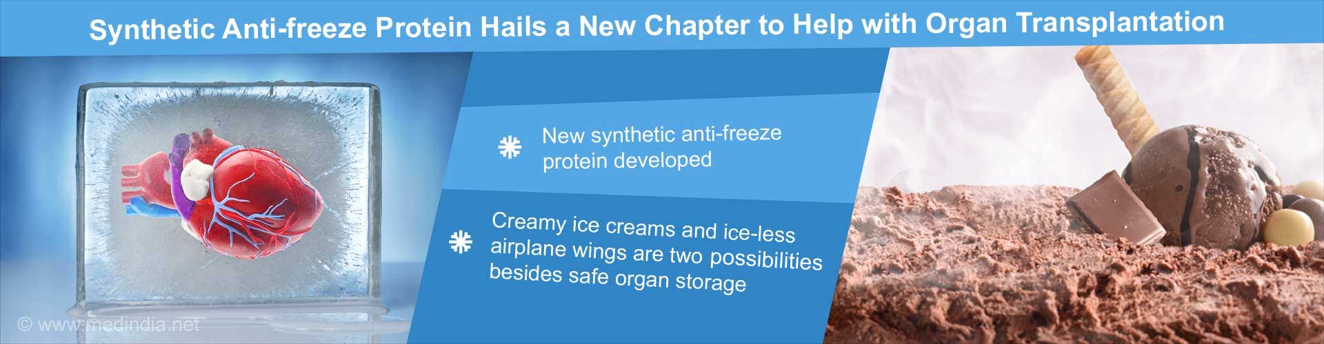 Synthetic Anti-freeze Protein Hails a New Chapter to Help with Organ Transplantation - new synthetic anti0freeze protein developed - creamy ice-cream and ice-less airplane wings are two possibilities, besides safe organ storage