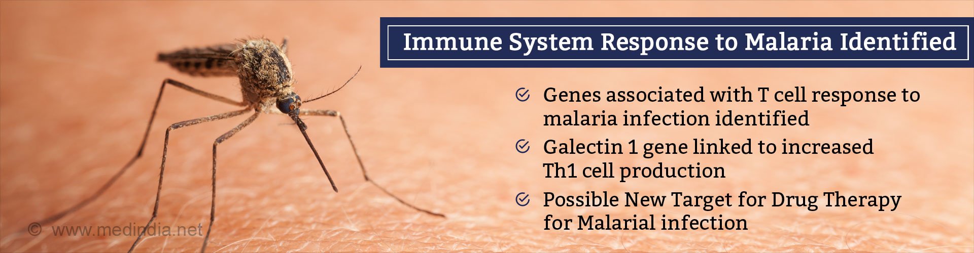 Immune system response to malaria identified