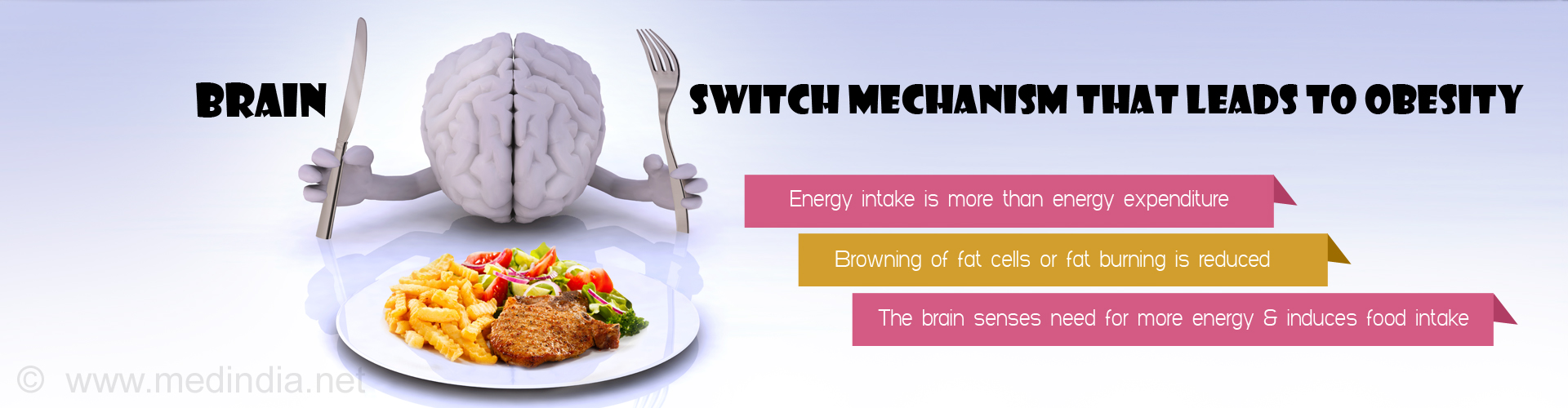 brain switch mechanism that leads to obesity - energy intake is more than energy expenditure - browning of fate cells or fat burning is reduced - the brain senses need for more energy and induces food intake