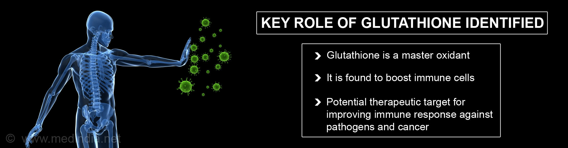 Key role of glutathione identified - Glutathione is a master oxidant -  It is found to boost immune cells - Potential therapeutic target for improving immune response against pathogens and cancer