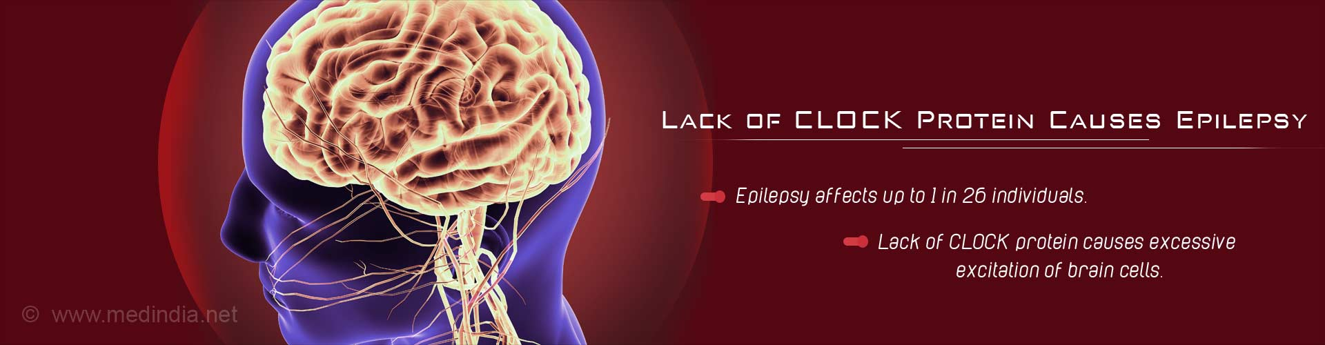 Lack of clock protein cause epilepsy