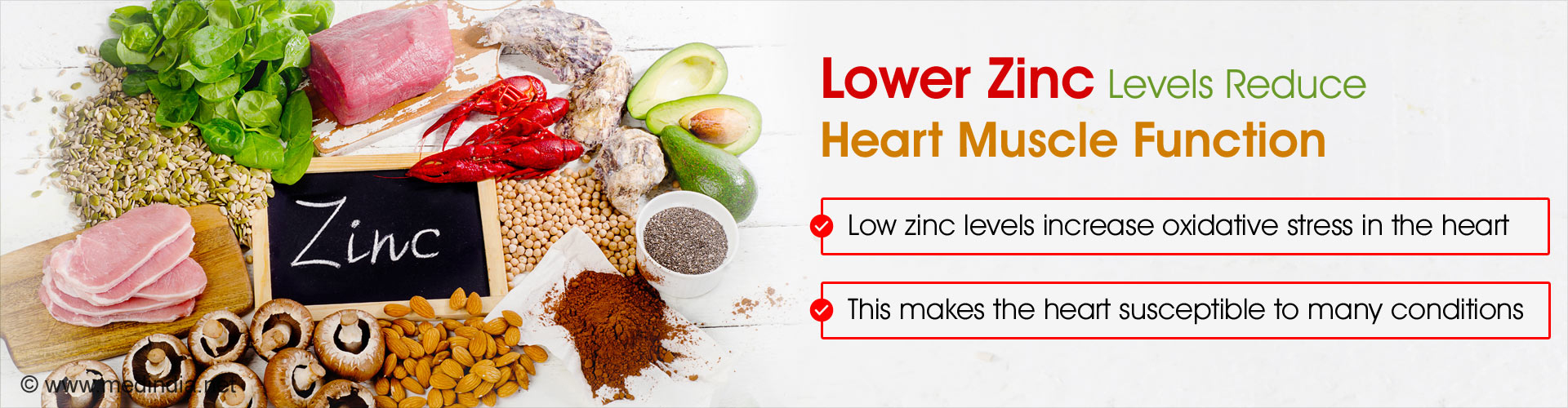 Lower zinc levels reduces heart muscle function - Low zinc levels increase oxidative stress in the heart - This makes the heart susceptible to many conditions