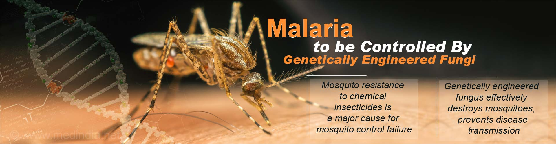 Natural Killers Fungi to be Genetically Engineered to Combat Malaria