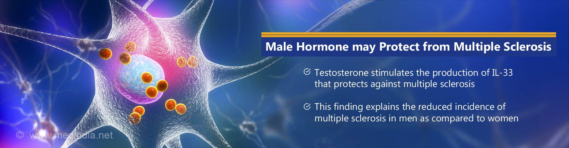 Possible Mechanism for Protective Effect of Testosterone in Multiple Sclerosis Uncovered