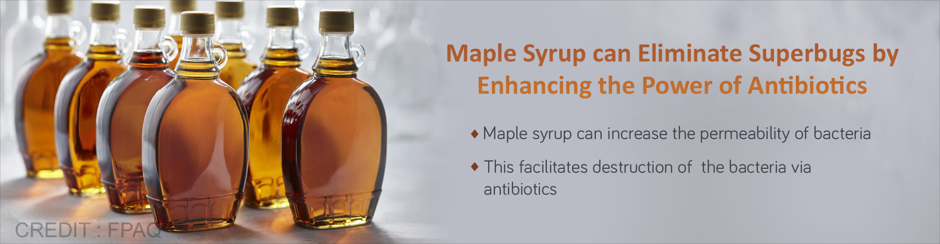 Maple Syrup can Eliminate Superbugs by Enhancing the Power of Antibiotics - Maple syrup can increase the permeability of bacteria - The facilities destruction of the bacteria via antibiotics