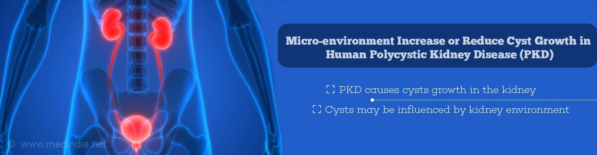 Lab Kidney Reveals Secrets of Polycystic Kidney Disease