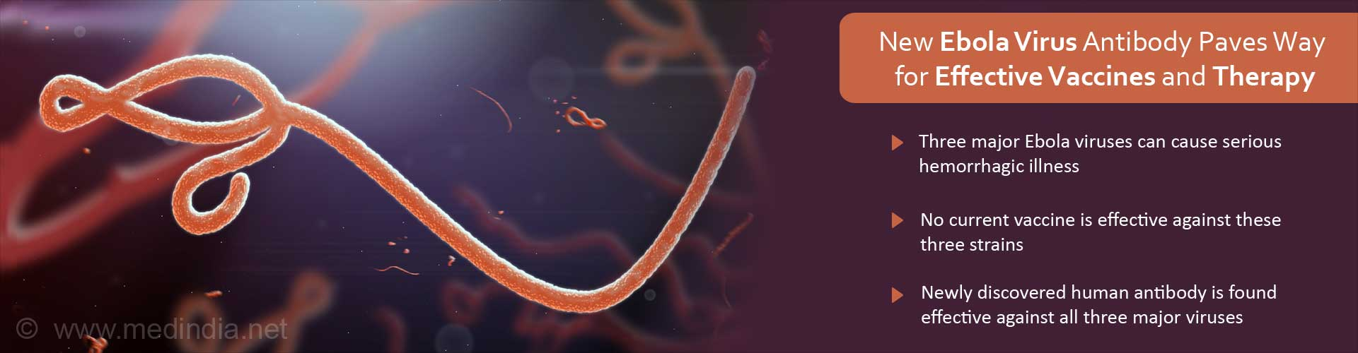 New Ebola Virus Antibody Paves the Way for Future Vaccines and Therapy