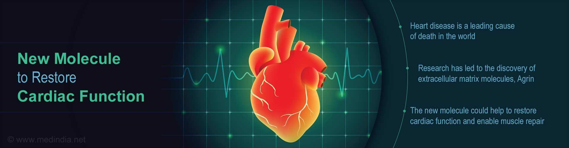 Novel Matrix Molecules Open Up Avenues to Restore Cardiac Function