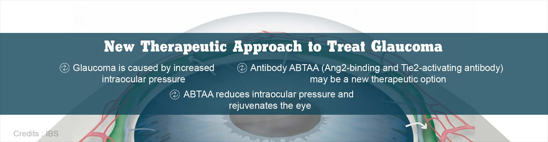 Glaucoma: Antibody Treatment may Reduce Intraocular Pressure