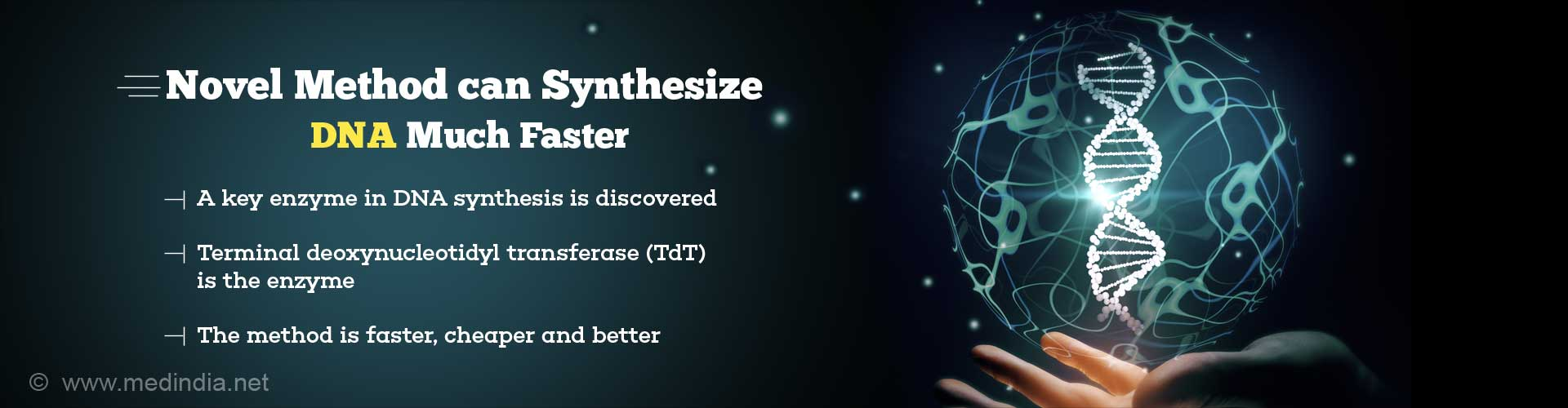 Novel method can synthesize DNA much faster. A key enzyme in DNA synthesis is discovered. Terminal deoxynucleotidyl transferase (TdT) is the enzyme. The method is faster, cheaper and better.