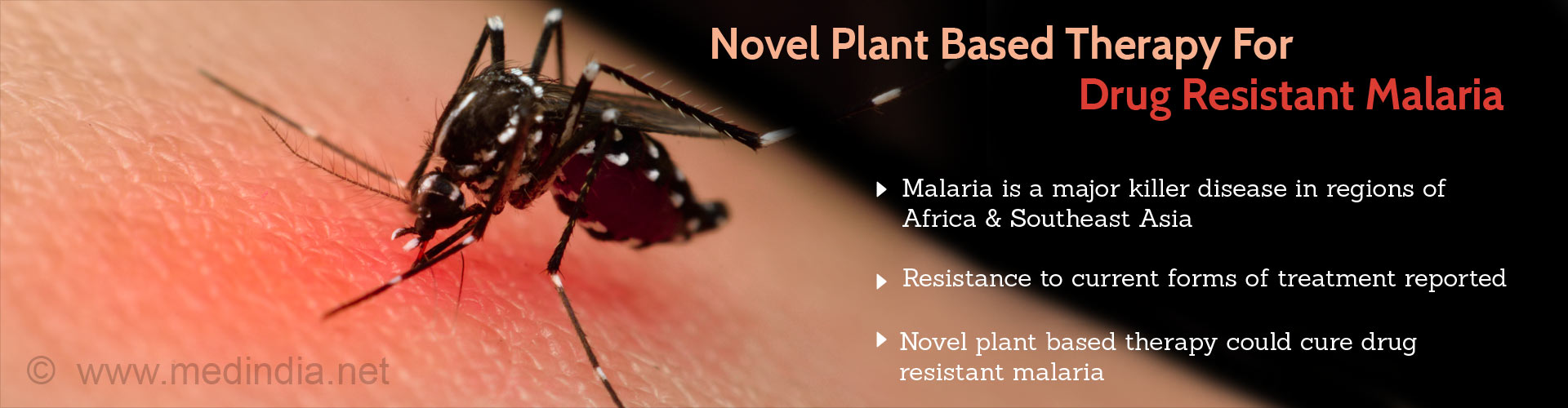 Novel plant based therapy for drug resistant malaria