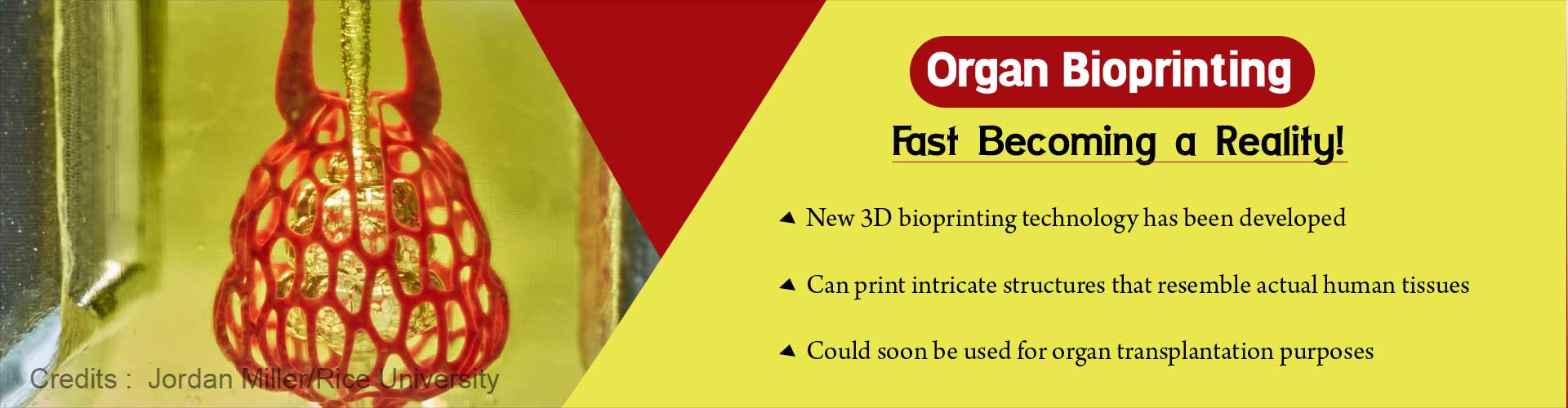 Organ bioprinting fast becoming a reality. New 3D bioprinting technology has been developed. Can print intricate structures that resemble actual human tissues. Could soon be used for organ transplantation purposes.