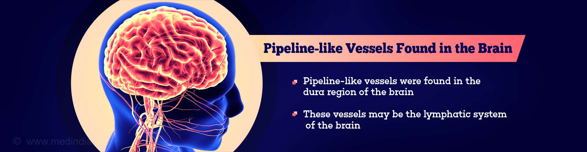 Pipeline-like Vessels Found in the Brain