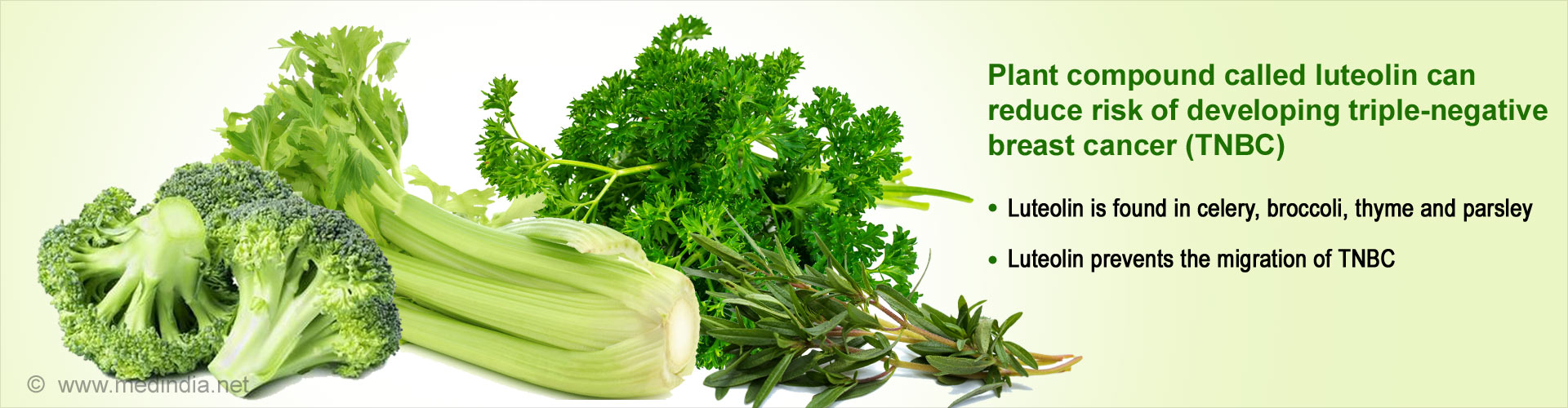 Plant compound called luteolin can reduce risk of developing triple-negative breast cancer (TNBC) - Luteolin is found in celery, broccoli, thyme and parsley - Luteolin prevents the migration of TNBC