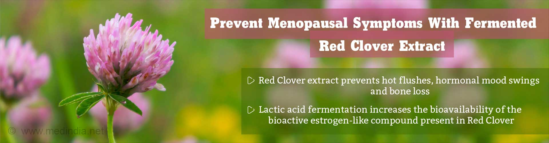 Try Fermented Red Clover Extract to Keep Menopausal Symptoms At Bay