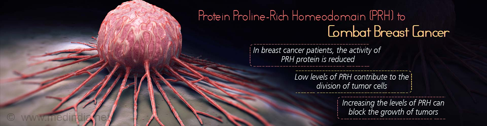 Protein proline-rich homeodomain (PRH) to combat breast cancer