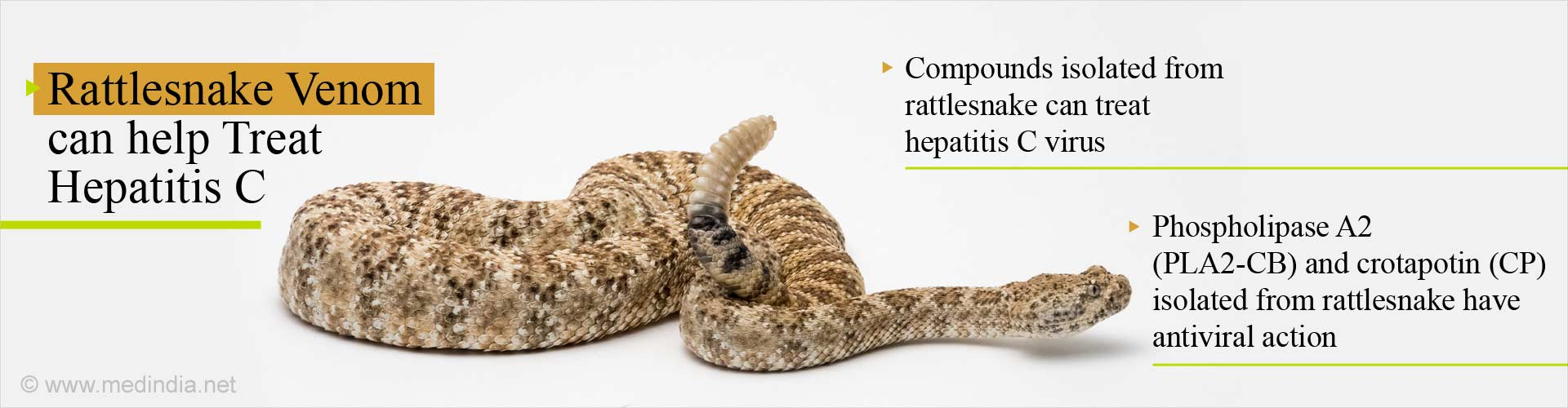 Treat Hepatitis C With Compounds from Rattlesnake Venom