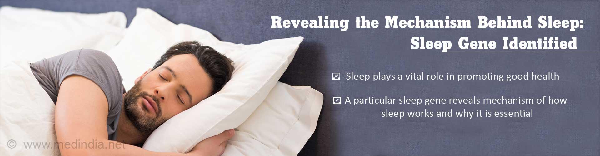 Revealing the mechanism behind sleep: sleep gene identified - Sleep plays a vital role in promoting good health - A particular sleep gene reveals mechanism of how sleep works and why it is essential