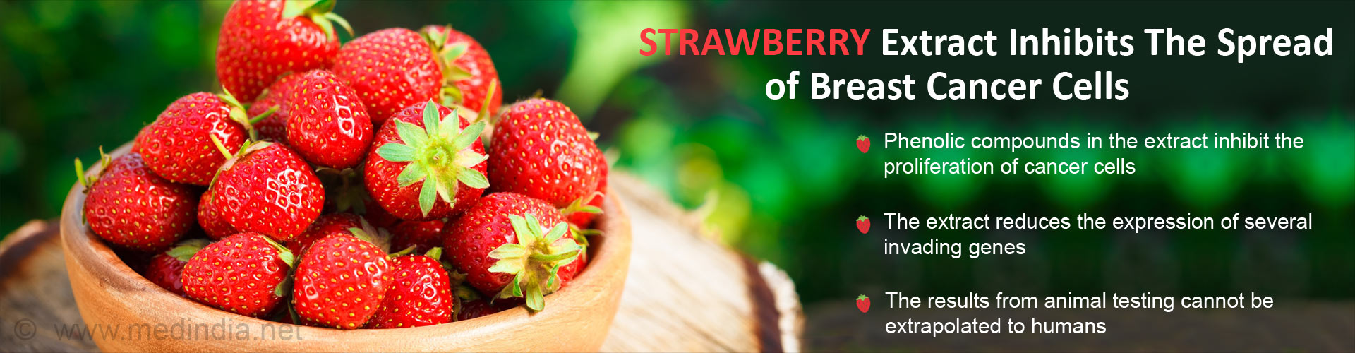 Strawberry extract inhibits the spread of breast cancer cells - Phenolic compunds in the extract inhibit the proliferation of cancer cells - The extract reduces the expression of several invading genes - The results from animals testing cannot be extrapolated to humans