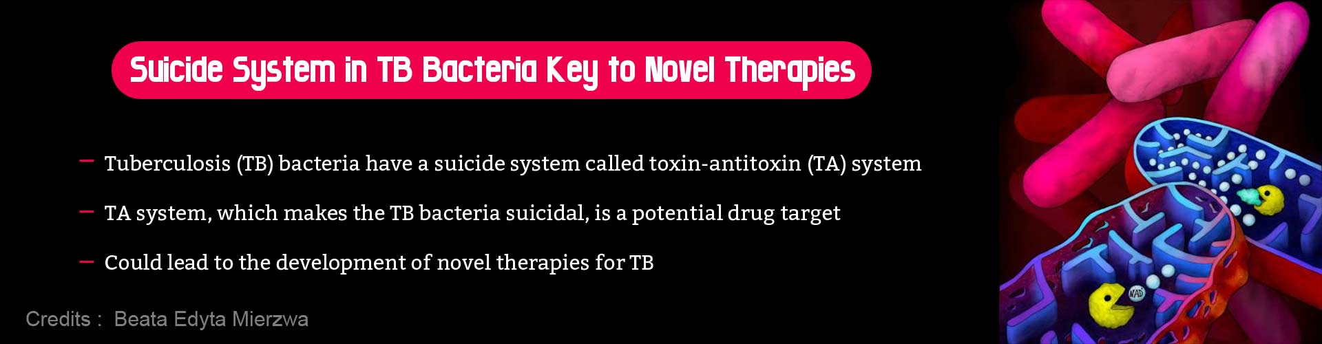 Suicide System of Tuberculosis Bacteria Can Lead to New Therapies