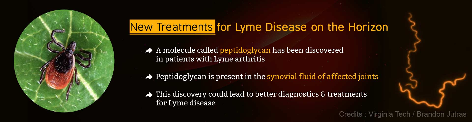 New treatments for lyme disease on the horizon. A molecule called peptidoglycan has been discovered in patients with lyme arthritis. Peptidoglycan is present in the synovial fluid of affected joints. This discovery could lead to better diagnostics and treatments for lyme disease.