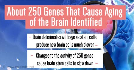 Genes That Cause Aging of Brain