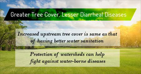 Health Tip on How Greater Tree Cover can Lessen Diarrheal Diseases in Children