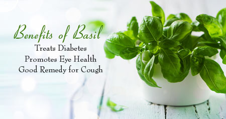 Fantastic Ways That Basil Helps Keep You Healthy
