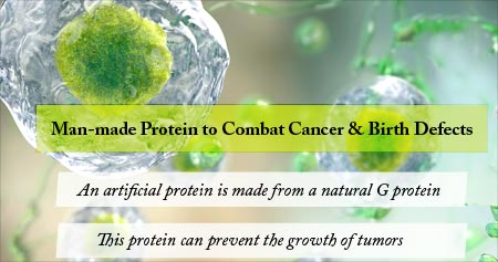 Health Tip on New Protein to Combat Cancer and Birth Defects