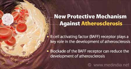 New Protective Mechanism Against Atherosclerosis