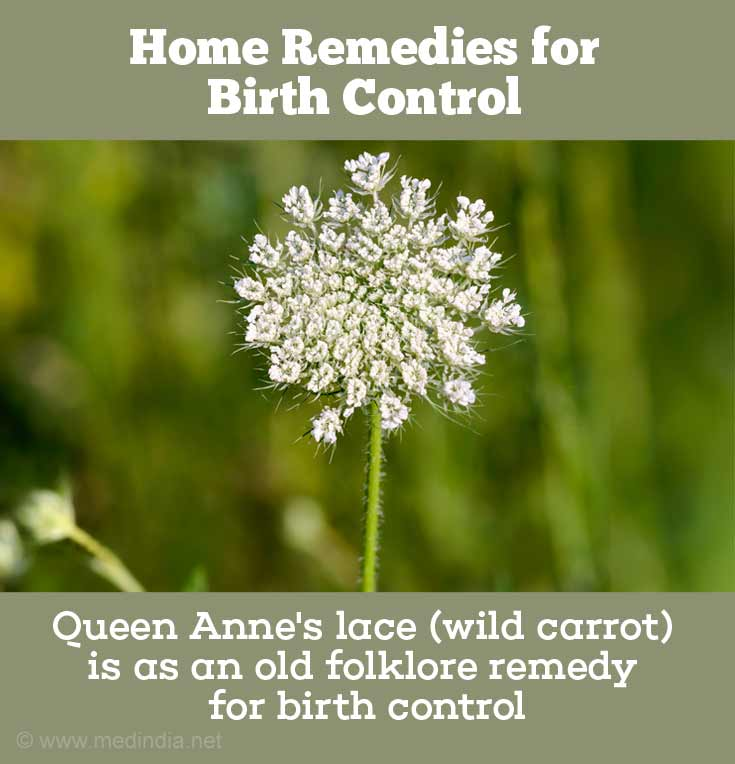 Wild Carrot or Queen Anne's lace for Birth Control