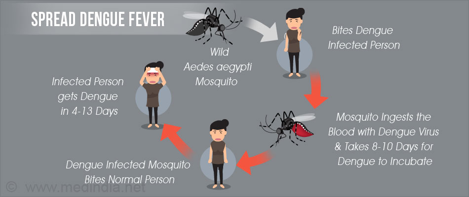 understand and prevent dengue Apply for the break dengue community understand and address community-level including the importance of community engagement in dengue prevention.