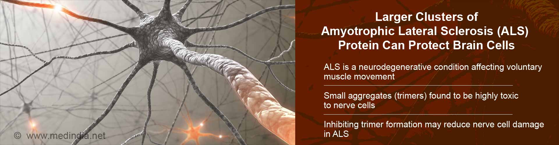 Larger Clusters of ALS Protein Can Protect Brain Cells