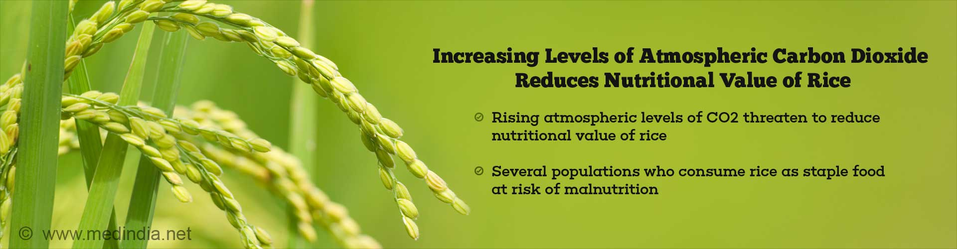 Nutritional Value of Rice Decreases With Increased Levels of Atmospheric Carbon Dioxide