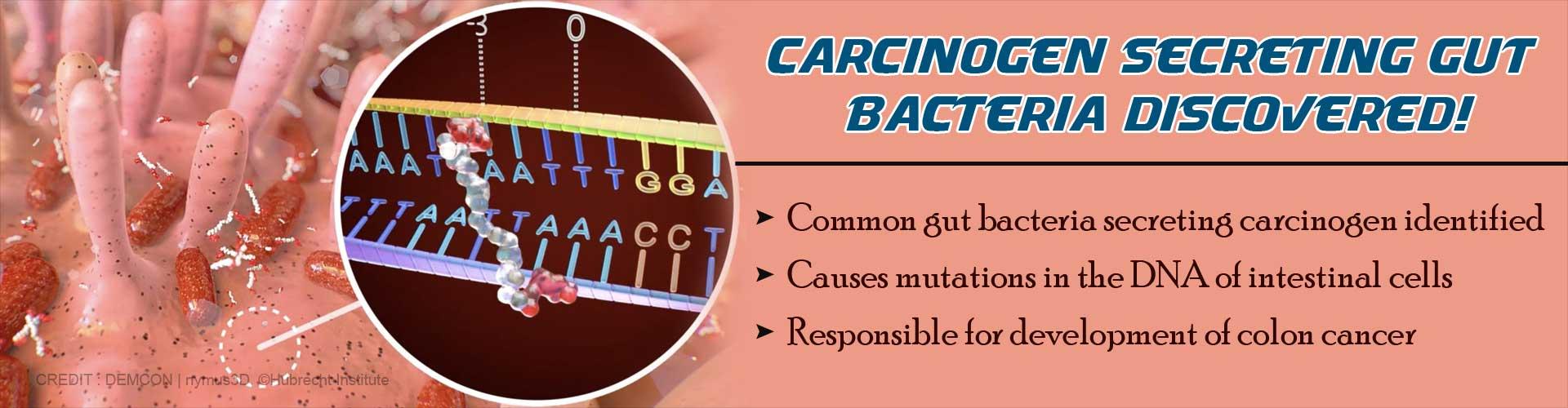 Gut Bacteria can Secrete Carcinogen: Study