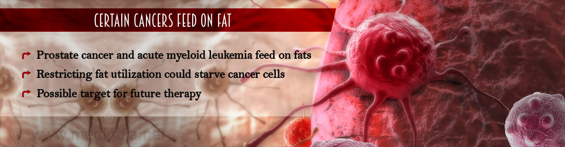 Fat Eating Cancers Identified