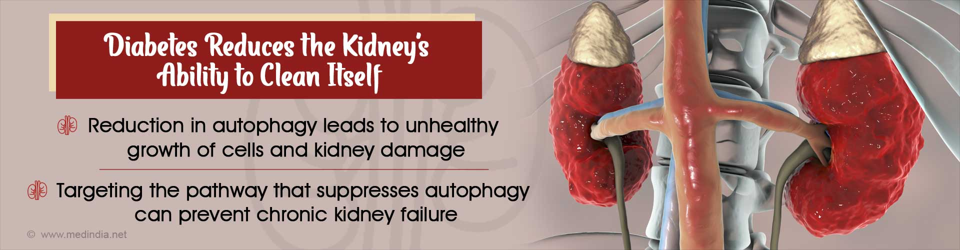 Kidney Damage in Diabetes Linked to Autophagy