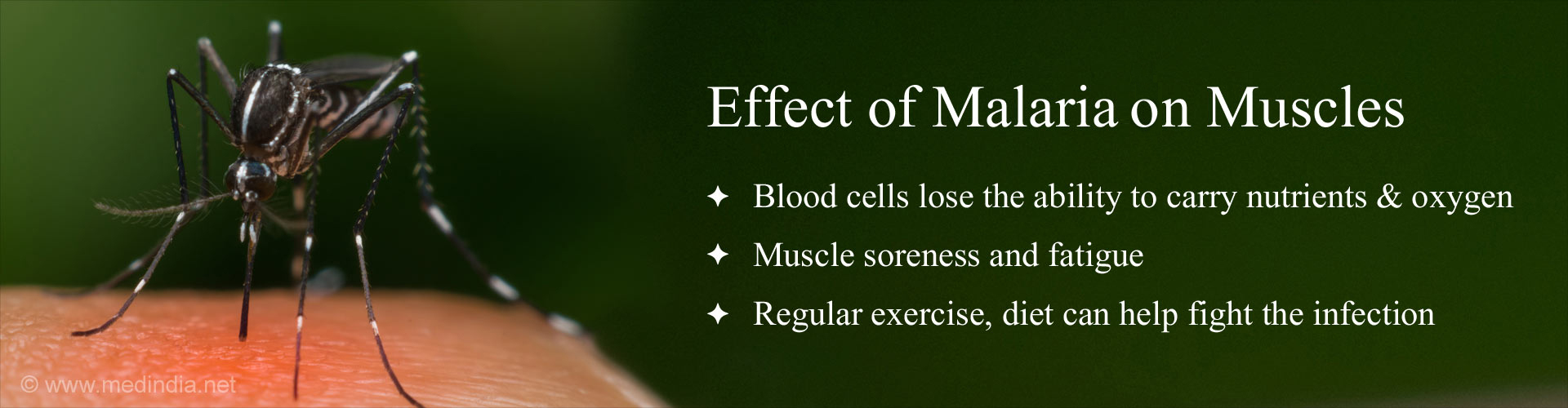 Exercise, Diet Could Combat the Effect of Malaria on the Muscles