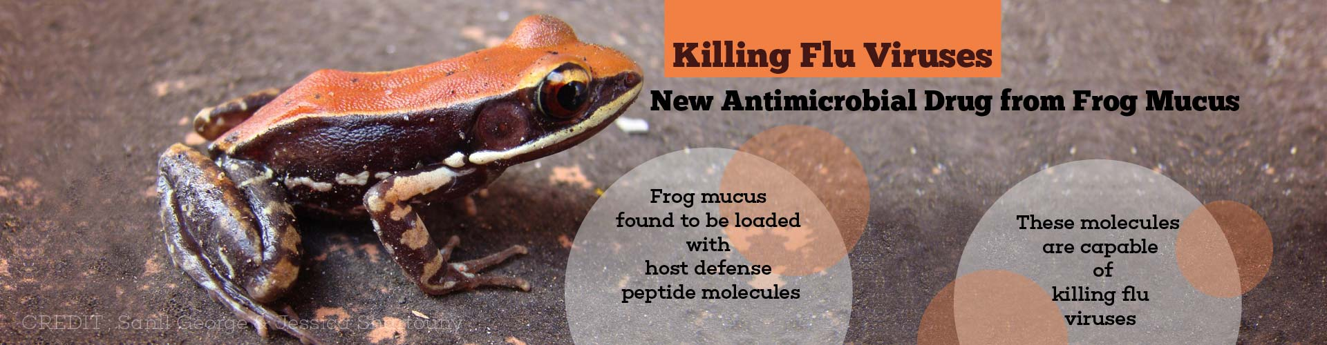 Can Frog Mucus Be the New Antimicrobial Drug to Kill Flu Viruses