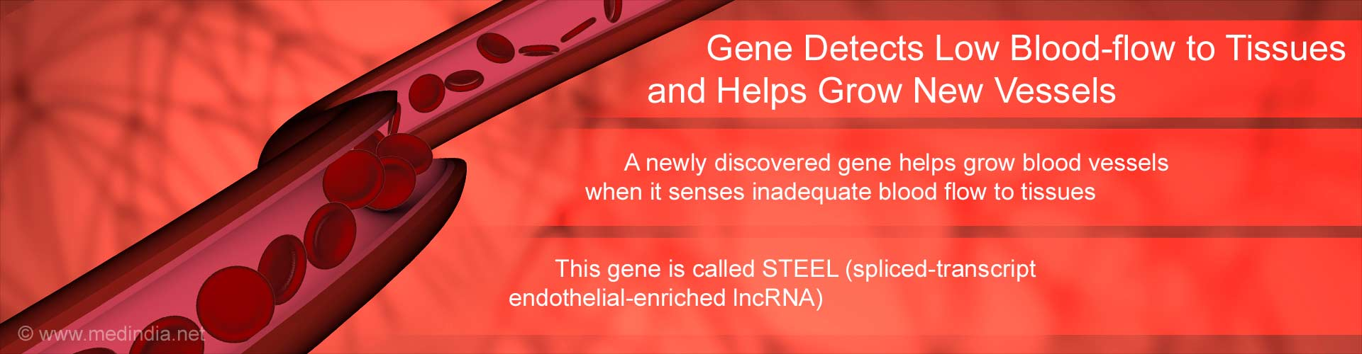 Gene Detects Low Blood-flow to Tissues and Helps Grow New Vessels