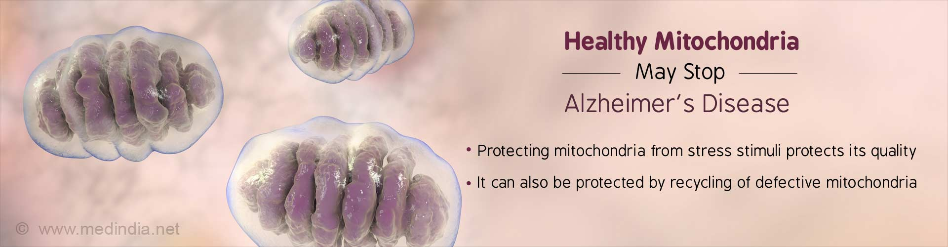 Healthy Mitochondria May Stop Alzheimer's Disease
