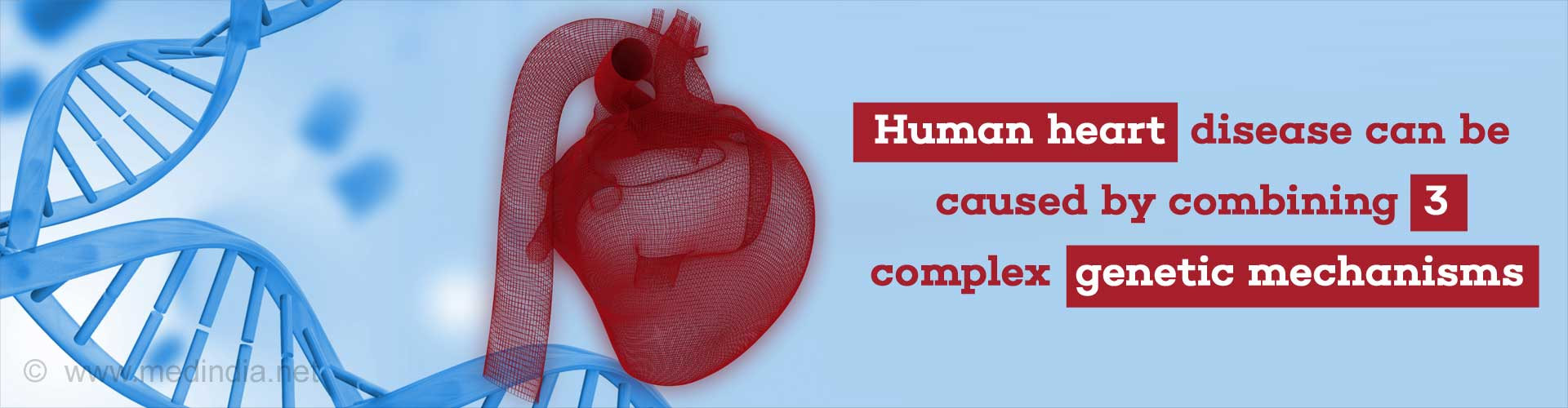 Combination of Three Gene Mutations Can Result in Deadly Heart Disease