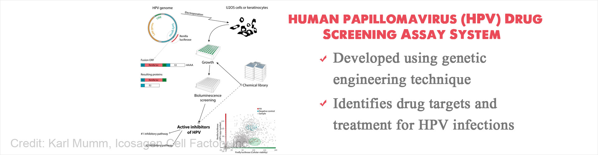 New Screening System to Identify Potential Drug Targets and Treatment for Human Papillomavirus (HPV)