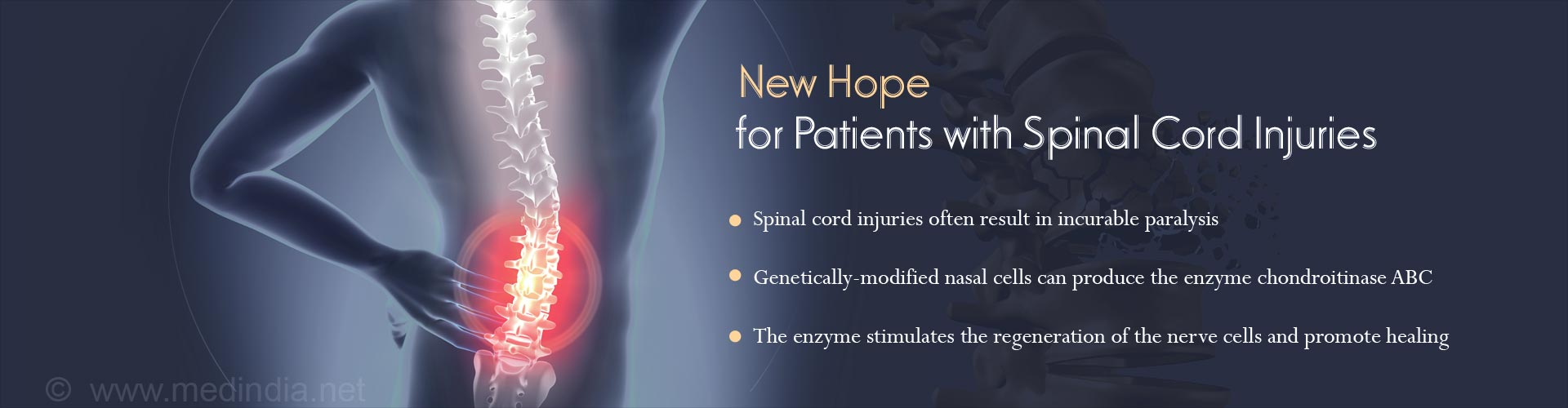 Genetically-Modified Nasal Cells can Potentially Treat Spinal Cord Injuries