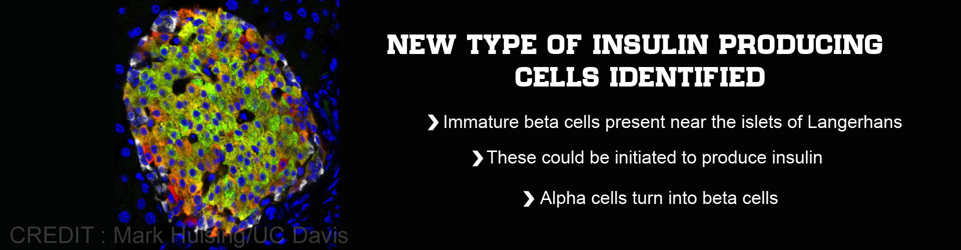 A Brand New Type of Insulin Producing Cells Identified