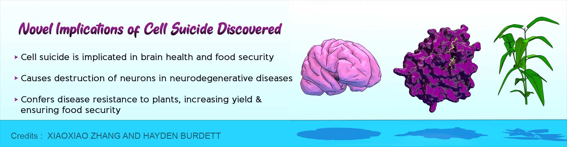 Cell Suicide Linked to Brain Health and Food Security