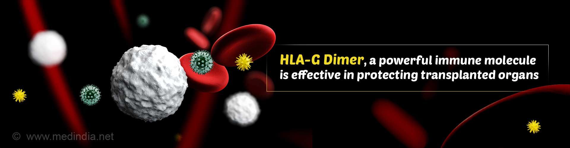 Powerful Immune Molecule Protects Transplanted Organs