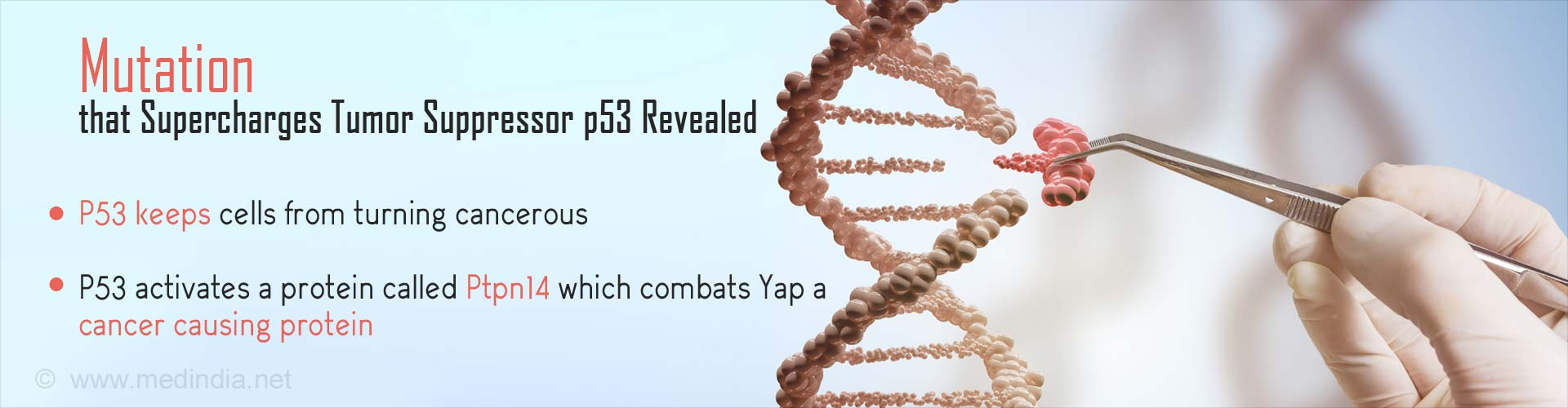 Stanford-led Study Uncovers Secrets of P53 Tumor Suppressor