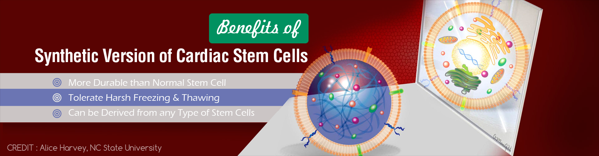 Novel Discovery of Synthetic Cardiac Stem Cells